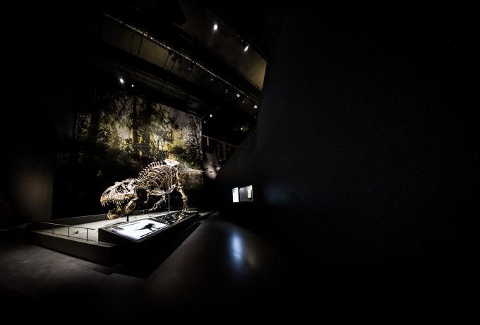 Natuurmuseum Naturalis in Leiden, het museum is verkozen tot Europees Museum van het jaar 2021. Foto: ANP / Remko de Waal