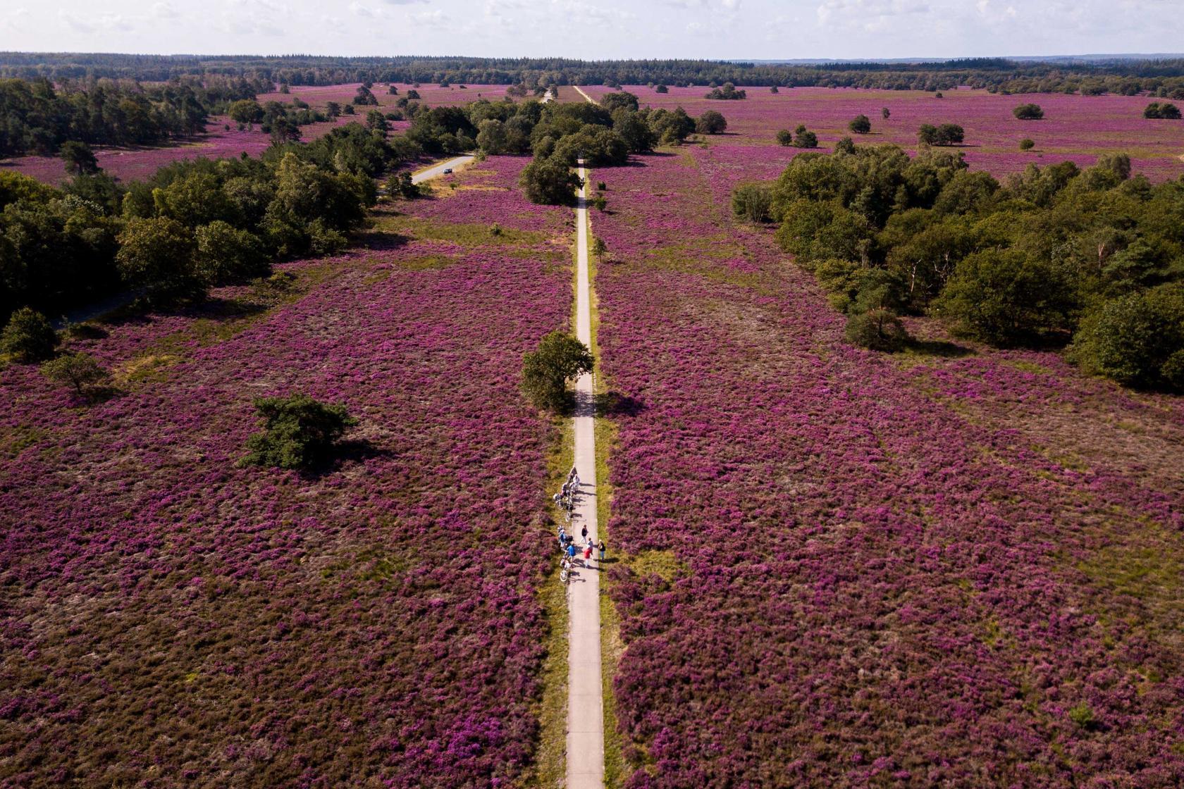 heide veluwe dronefotografie
