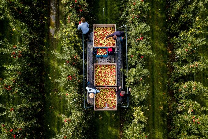 Een fruitteler vanuit de lucht. Foto: Sem van der Wal